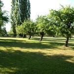 Die Neuhof Apfelwiese