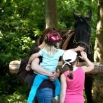 Pferd mit Besuchern