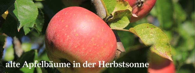 alte-Apfelbaume-in-der-Herbstsonne